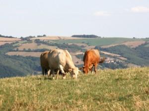 Aveyron / Gastronomie / Ferme / Roquefort