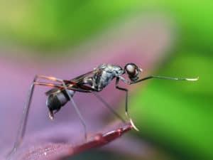 Classe découverte sur le thème des insectes