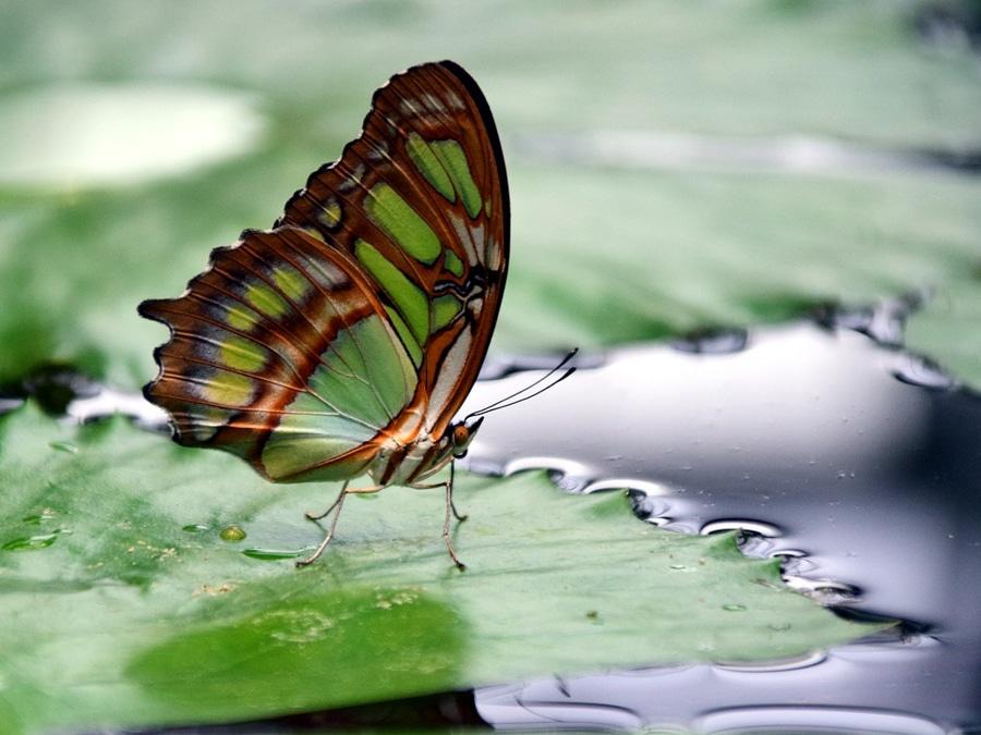 Classe de découverte insectes et eau